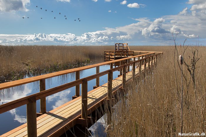 Boardwalks at Vejlerne Nature Reserve.